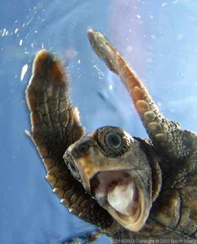 triviaaa turtle