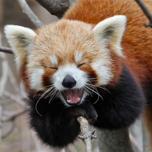 trivia panda