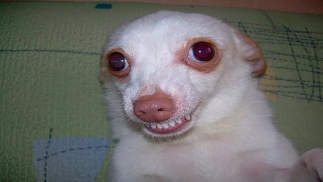 puppy grin