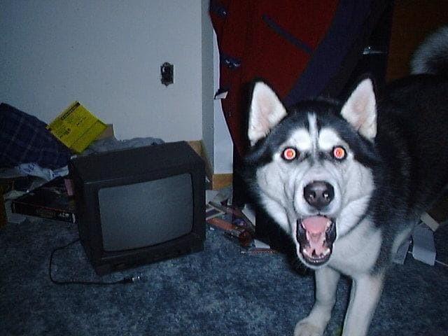 triviaaaa dog